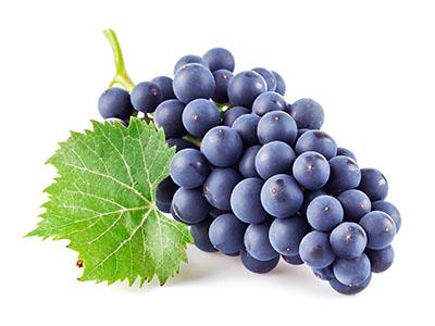Саженцы виноградной лозы почтой