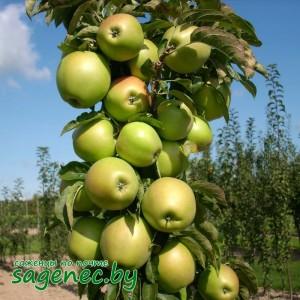 Яблоня колоновидная Малюха, купить по почте